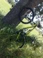 coccola quercia-2